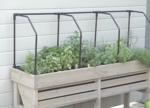 Library of Things - Herb Garden